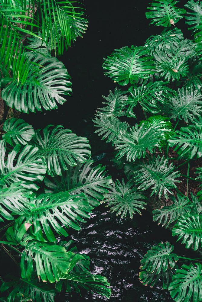 Går du helhjertet ind i et projekt med at bevare regnskoven